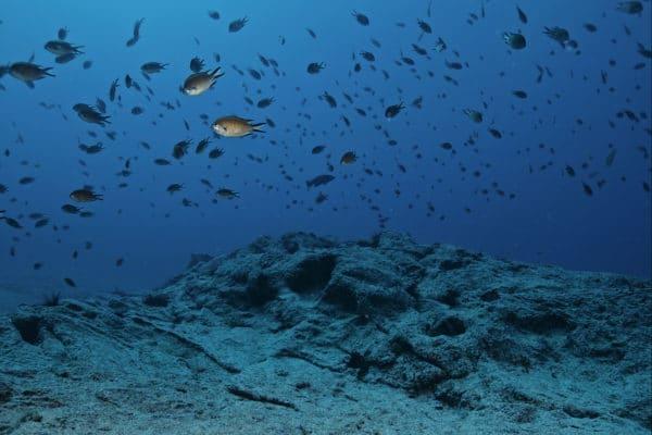 snorkeling 03